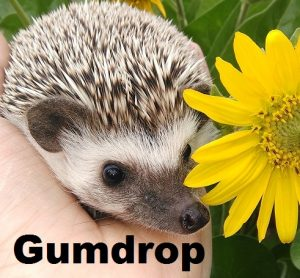 gumdrop-with-name